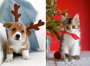 Christmas card photo ideas: pet photo tips