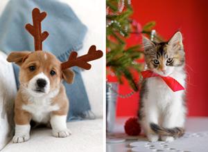 Christmas card photo ideas: pet photo tips