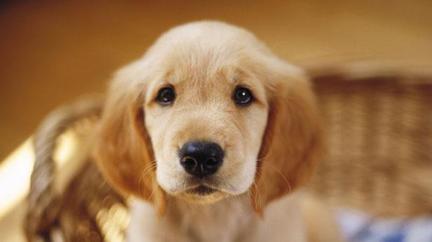 Make a photo flip book and watch your new pet grow #Hallmark #HallmarkIdeas