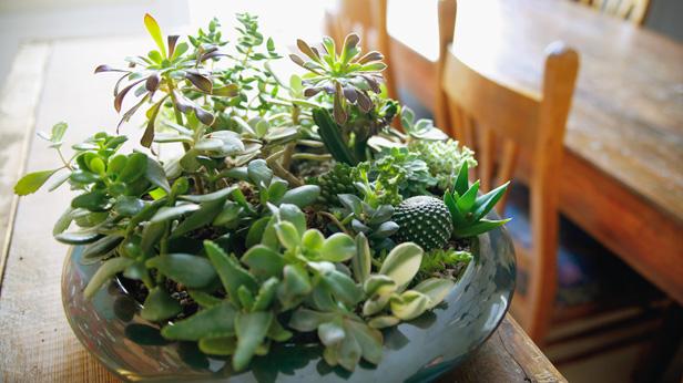 Make Your Indoor Garden Grow Hallmark Amp Community