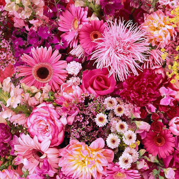 birth flowers  hallmark ideas  inspiration, Natural flower