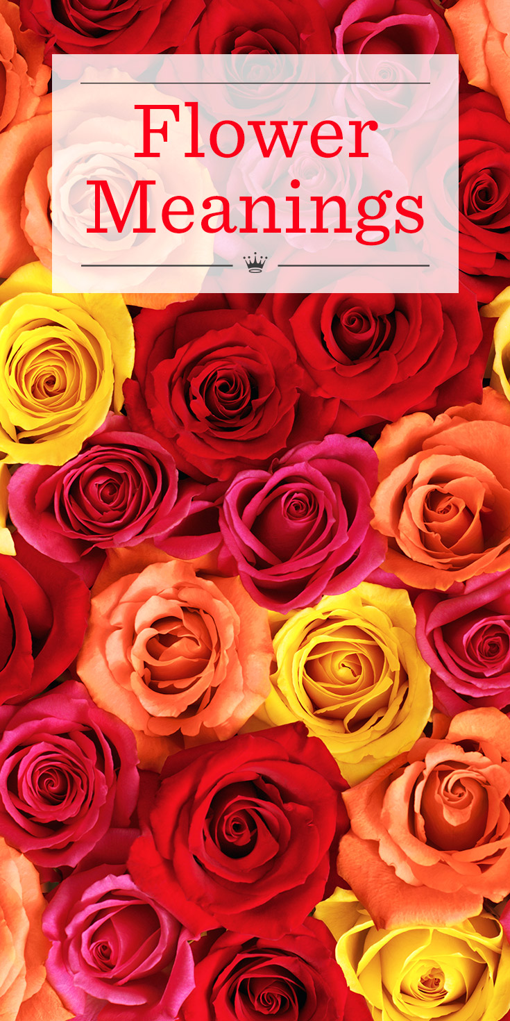 Flower meanings learn the language of flowers hallmark ideas flower meanings learn the language of flowers hallmark ideas inspiration biocorpaavc