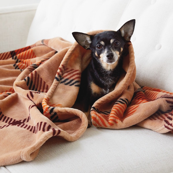 Cozy blanket and dog - Fall activity